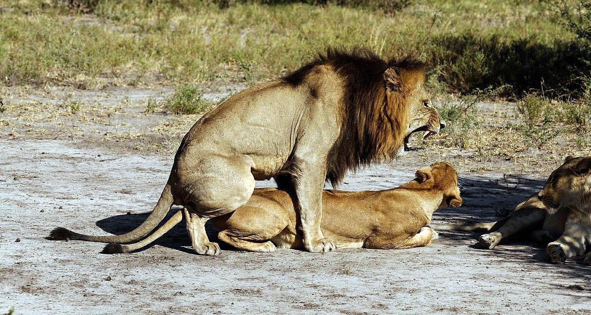 Pueblo girl videos of lions having sex mature mother