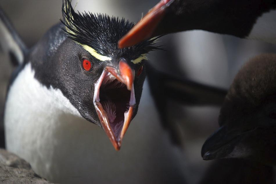 penguins essay